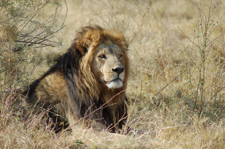 Botswana Adventure - Kiboko Adventures